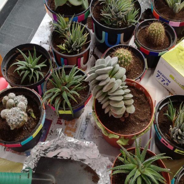 Laboratorio botanico Residenza Protetta Bagnasco | Opere Sociali Servizi Savona