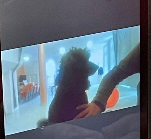 Opere Sociali Servizi Savona - Pet Therapy Residenza Protetta Santuario